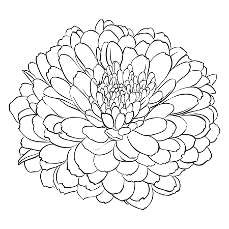 ink drawing: beautiful monochrome black and white flower isolated on white background. Hand-draw contour line and strokes. greeting card and invitation of wedding, birthday, mothers day and other seasonal holiday