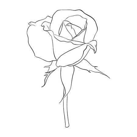Beautiful monochrome black and white rose isolated on background. Hand-drawn line. for greeting cards and invitations of the wedding, birthday, Valentine's Day, mother's day and other seasonal holiday