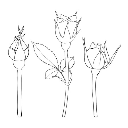 rose bud: Beautiful monochrome black and white rose isolated on background. Hand-drawn line. for greeting cards and invitations of the wedding, birthday, Valentines Day, mothers day and other seasonal holiday