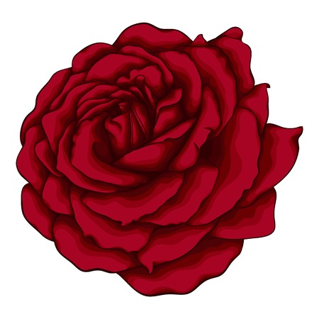 macro flowers: beautiful red rose isolated on white background. for greeting cards and invitations of the wedding, birthday, Valentines Day, mothers day and other seasonal holidays Illustration