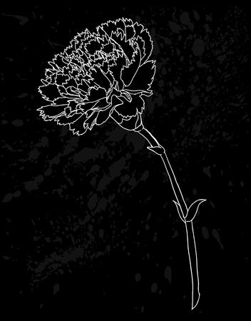 clavel: hermoso monocromático negro y flor de clavel blanco aislado en fondo blanco. Dibujado a mano las curvas de nivel y accidentes cerebrovasculares. para tarjetas de felicitación e invitaciones de boda, cumpleaños, día de la madre y otra temporada de vacaciones