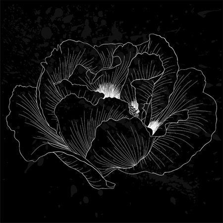 tree peony: beautiful monochrome black and white Plant Paeonia arborea (Tree peony) flower isolated. for greeting cards and invitations of wedding, birthday, mothers day and other seasonal holiday Illustration