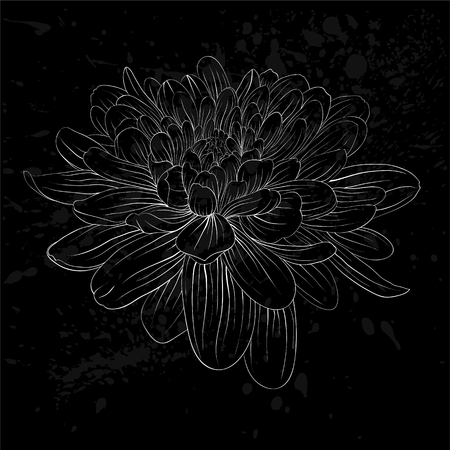 dahlia: beautiful monochrome black and white dahlia flower isolated. Hand-drawn contour lines and strokes. for greeting cards and invitations of wedding, birthday, mothers day and other seasonal holiday