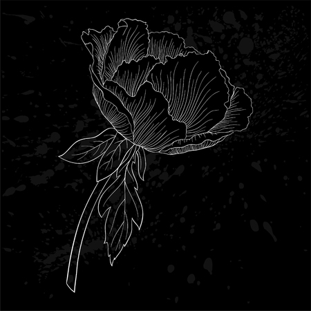 isolated flower: beautiful monochrome black and white Plant Paeonia arborea (Tree peony) flower isolated. for greeting cards and invitations of wedding, birthday, mothers day and other seasonal holiday Illustration