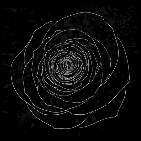 in bloom: beautiful black and white rose outline with gray spots on a black background. design for greeting card and invitation of the wedding, birthday, Valentines Day, mothers day and other seasonal holiday