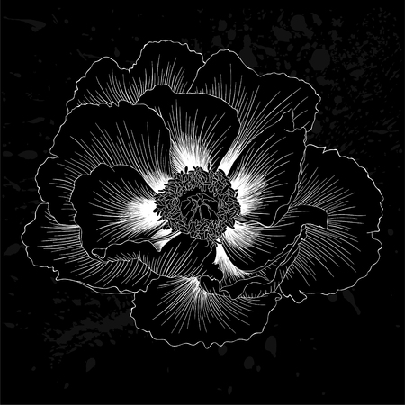 peony black: beautiful monochrome black and white Plant Paeonia arborea (Tree peony) flower isolated. for greeting cards and invitations of wedding, birthday, mothers day and other seasonal holiday Illustration