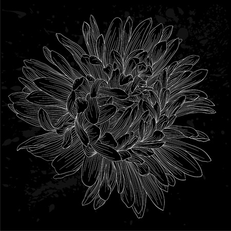 aster: beautiful monochrome, black and white aster flower isolated. Hand-drawn contour lines and strokes. for greeting cards and invitations of wedding, birthday, mothers day and other seasonal holiday