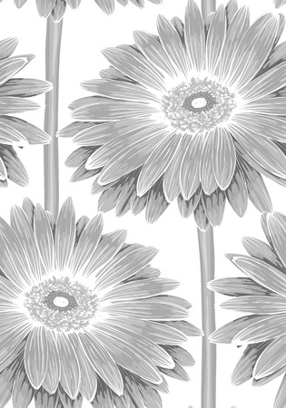 daisy: Beautiful monochrome, black and white seamless background with gerbera flower with a stem. background for design for greeting card and invitation of the wedding, birthday, Valentines Day, mothers day and other seasonal holiday Illustration