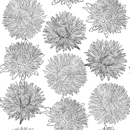 aster: monochrome, black and white seamless background with flowers aster. design for greeting card and invitation of the wedding, birthday, Valentines Day, mothers day and other seasonal holiday