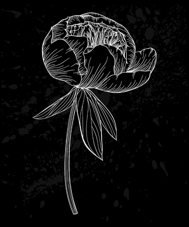 black and white peony flower isolated on background.  contour lines and strokes. design for greeting card and invitation of the wedding, birthday, Valentines Day, mothers day and other seasonal holiday.