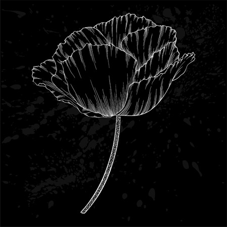 art pen: beautiful monochrome black and white poppy. Hand-drawn contour lines and strokes. design for greeting card and invitation of the wedding, birthday, Valentines Day, mothers day and other seasonal holidays.