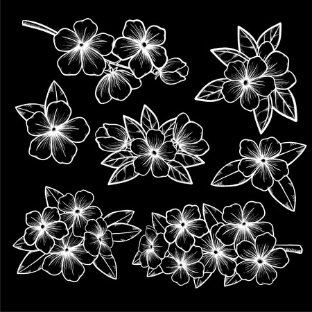 white blossom: Beautiful monochrome black and white floral collection with leaves and flowers. for greeting cards and invitations of the wedding, birthday, Valentines Day, mothers day and other seasonal holidays Illustration