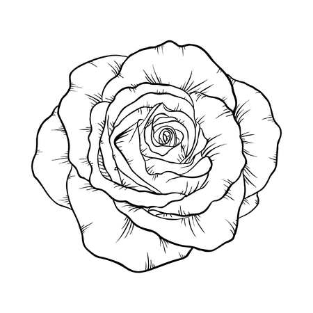 rosebud: Beautiful monochrome black and white rose isolated on white background. Hand-drawn contour line. for greeting cards and invitations of wedding, birthday, mothers day and other seasonal holiday