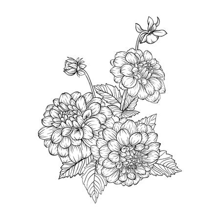 dessin fleur: beau bouquet monochrome noir et blanc dahlia isolé sur fond. Dessiné à la main. la conception carte de voeux et invitation du mariage, anniversaire, Saint-Valentin, le jour de mère et d'autres vacances Illustration