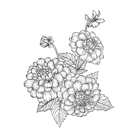 mooie zwart-wit zwart en wit boeket dahlia geïsoleerd op achtergrond. Hand getekend. ontwerp wenskaart en uitnodiging van de bruiloft, verjaardag, Valentijnsdag, moederdag en andere vakantie