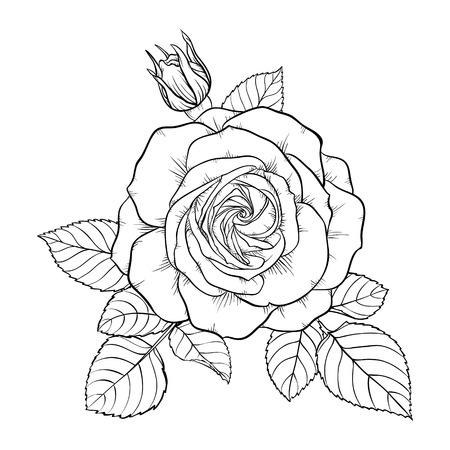broderie: beau noir monochrome et bouquet rose blanche isolé sur fond. Dessiné à la main. la conception carte de voeux et invitation du mariage, anniversaire, Saint-Valentin, le jour de mère et d'autres vacances