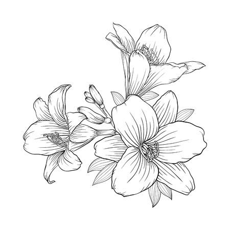 bello in bianco e nero in bianco e bouquet giglio bianco isolato su sfondo. Disegnato a mano. progettazione biglietto di auguri e invito del matrimonio, compleanno, San Valentino, festa della mamma e altra festa