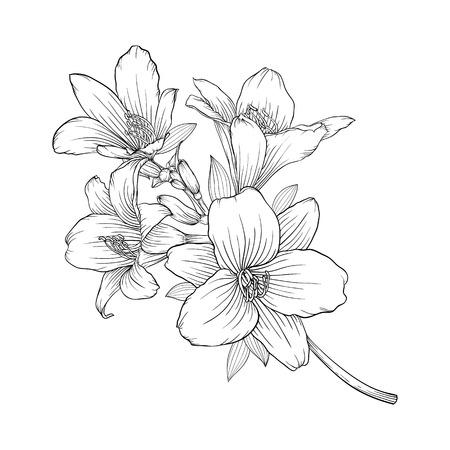 bordados: hermoso monocromático negro y blanco ramo de lirio aislados en el fondo. Dibujado a mano. diseño de tarjetas de felicitación y la invitación de la boda, cumpleaños, San Valentín, el día de la madre y el otro día de fiesta