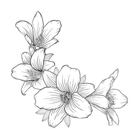 美しいモノクロの白と黒の花束ユリの背景に分離されました。手描き。グリーティング カードと招待状結婚式、誕生日、バレンタインデー、母の日  イラスト・ベクター素材