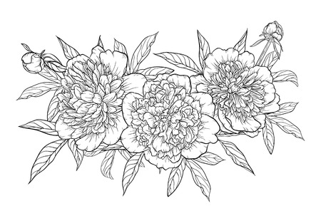 beautiful monochrome black and white bouquet peony isolated on background. Hand-drawn. design greeting card and invitation of the wedding, birthday, Valentines Day, mothers day and other holiday Illustration