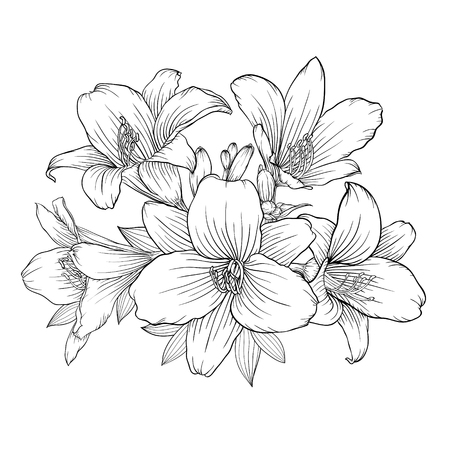 beautiful monochrome black and white bouquet lily isolated on background. Hand-drawn. design greeting card and invitation of the wedding, birthday, Valentine's Day, mother's day and other holiday