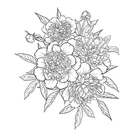 peony black: beautiful monochrome black and white bouquet peony isolated on background. Hand-drawn. design greeting card and invitation of the wedding, birthday, Valentines Day, mothers day and other holiday Illustration