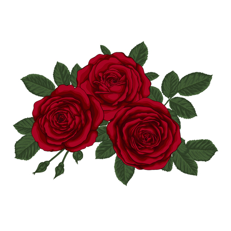 detailed image: beautiful bouquet with three red roses and leaves. Floral arrangement. design greeting card and invitation of the wedding, birthday, Valentines Day, mothers day and other holiday.