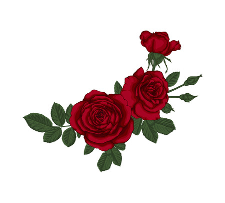 beautiful bouquet with red roses and leaves. Floral arrangement. design greeting card and invitation of the wedding, birthday, Valentines Day, mothers day and other holiday