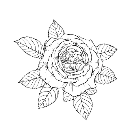 beautiful black and white bouquet rose and leaves. Floral arrangement isolated on background.
