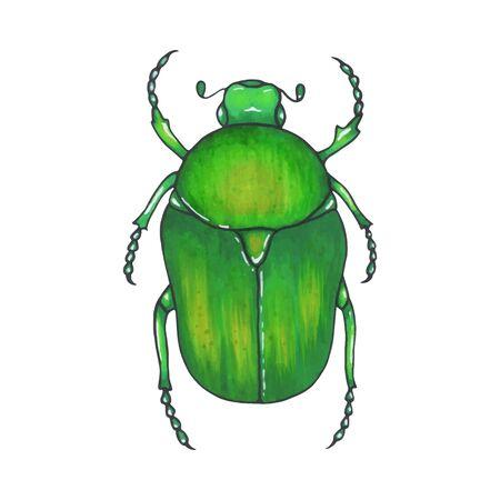 bug bronze. Hand drawn insect illustration, detailed art. Isolated bug on white background 向量圖像