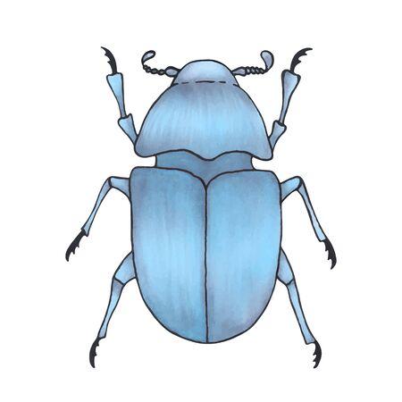 error azul. Ilustración de insectos dibujados a mano, arte detallado. Error aislado sobre fondo blanco. Ilustración de vector