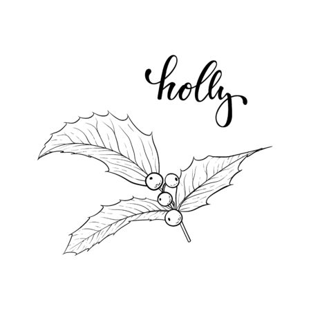black and white hand drawn holly, ilex branch with berry and leaves on white background. design holiday greeting cards and invitations of Merry Christmas and Happy New Year, seasonal winter holidays.