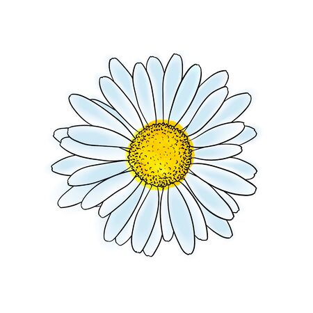 beautiful doodle sketch daisy flower with outline isolated. for greeting cards and invitations of the wedding, birthday, Valentine's Day, mother's day and other seasonal holiday