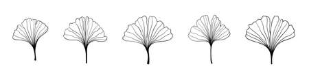 Ginkgo biloba black outline in sketch style. Isolated on white background. Sketch illustration. Abstract art nature. Vector hand drawing Line art.