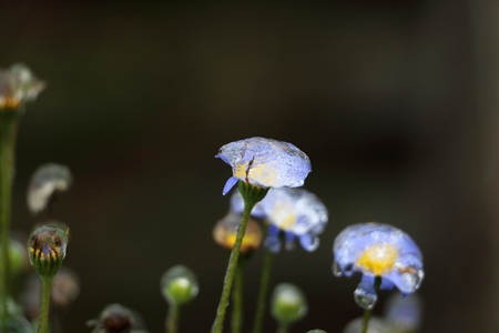 glazed frost on blue and yellow flower, looks like it has a internal light