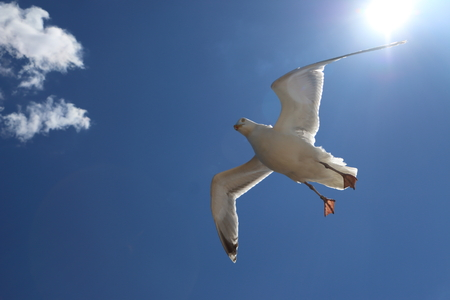 seagull flying around the boat hoping for some food.