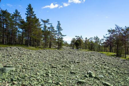 Field with cobbled stones in Sweden, also known as Klappenstenf ll, sorted by size and transported with glacier ice in the ice age.
