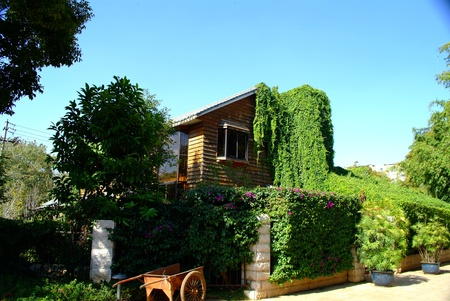 overgrown: House overgrown with green ivy
