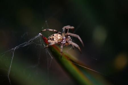 araneae: Araneae spider Stock Photo