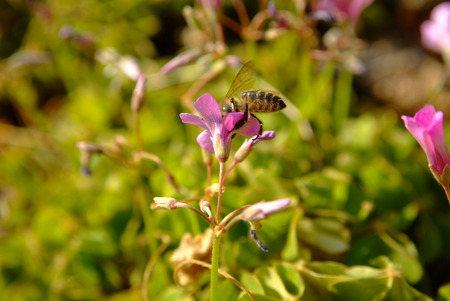stamin: Flower and bee