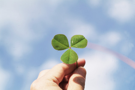three leaved: Hand holding a four leaf clover