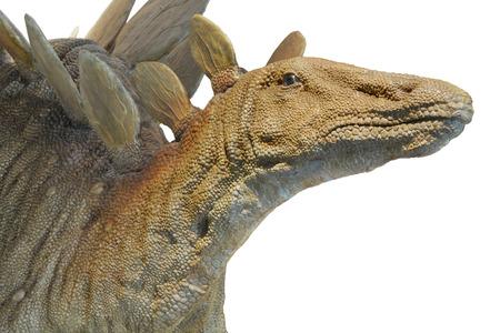 stegosaurus: Dinosaurio Stegosaurus aislado sobre fondo blanco. Foto de archivo
