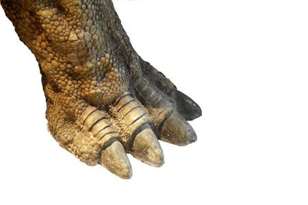 garra: Garra dinosaurio