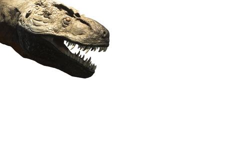 tyrannosaurus rex: Tyrannosaurus Rex head buckteeth