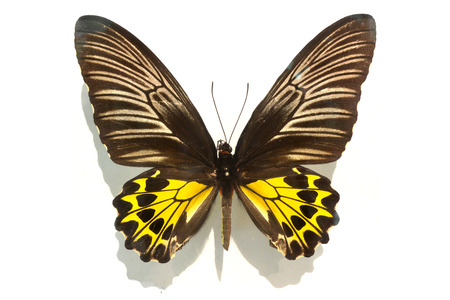 true: True butterfly with fantasy colours. Stock Photo