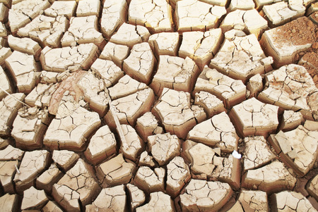 riverbed: Drought, dry earth.