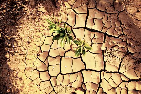 sequias: Tierra seca Sequía.