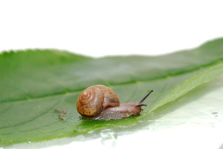 slithery: Snail