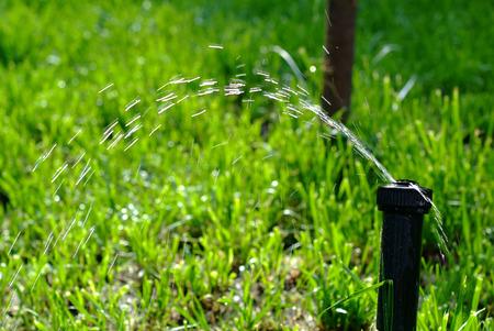 water sprinkler: Water sprinkler showering grasses   Stock Photo