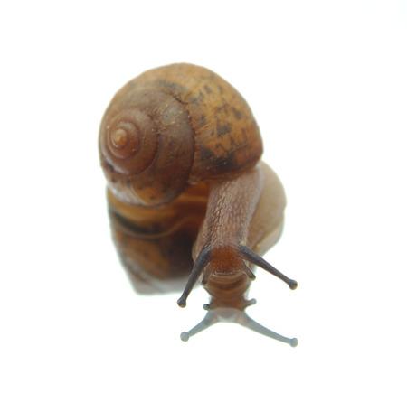yuck: Snail